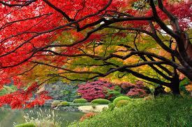 imagen jardines japón